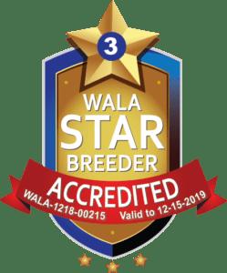 JoaLins WALA Star Logo