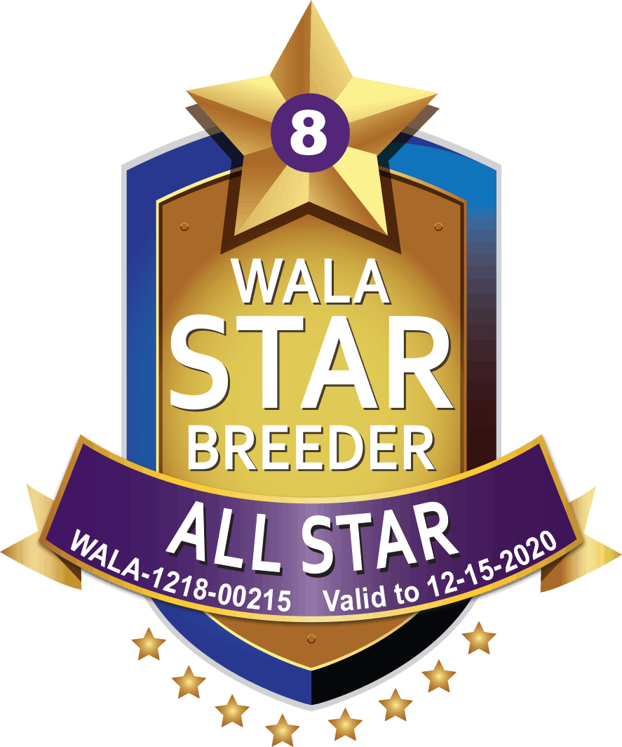 WALA all star breeder shield
