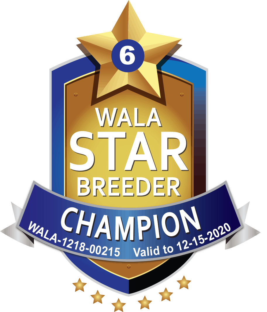 WALA champion breeder shield