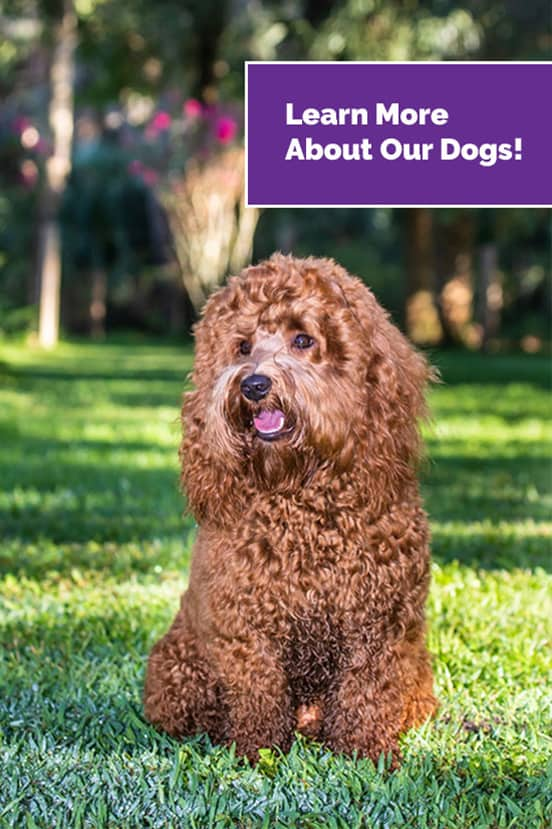 Learn More about our dogs