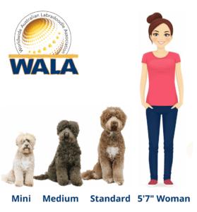 WALA-height-chart